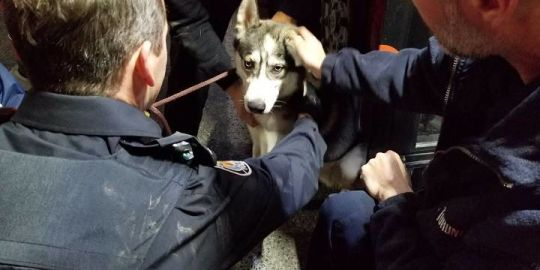 After being struck by car, TTC, Animal Services seek to reunite dog with owner