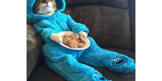 U.S. embassy sorry for sending Cookie Monster cat pajama invitation