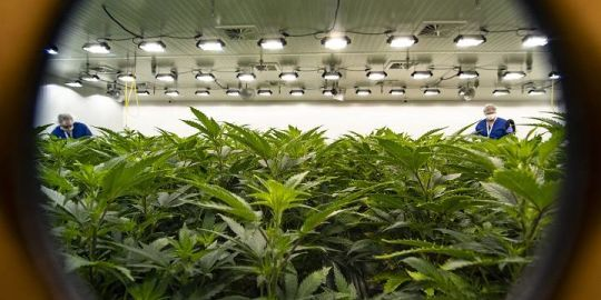 If you have simple pot possession on your record, it'll soon be easier to get a pardon