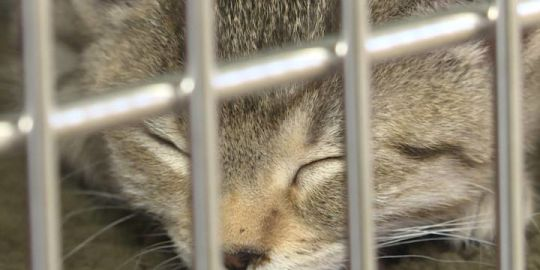 With Quinte Humane Society shelter at double capacity, officials call for adoptions