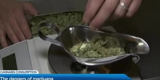 Guelph-area survey reveals attitude toward cannabis use