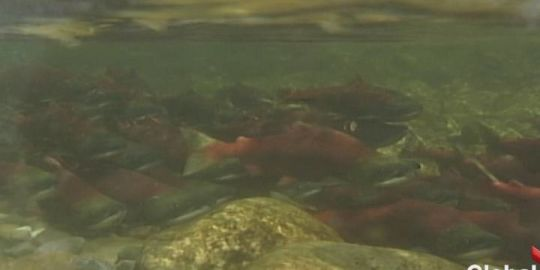 Kelowna conference focuses on flows for fish