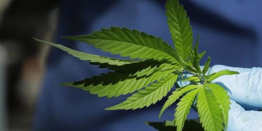 Pot is legal, but that doesn't mean Canadians think other drugs should be: Ipsos poll