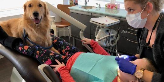 New Brunswick clinic making 'paw-sitive' impact on fear of visiting the dentist