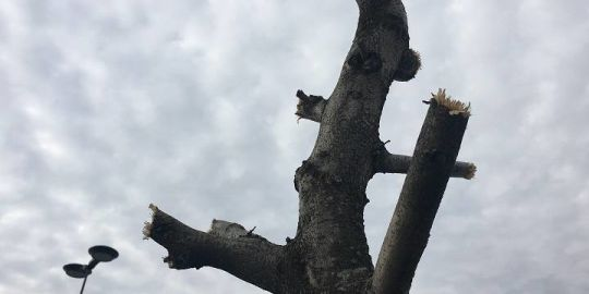 'Horrible' tree pruning leaves shopping centre with 'barren' look