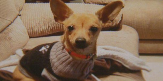 Calgary pet owner warns of 'extortionists' after dog goes missing