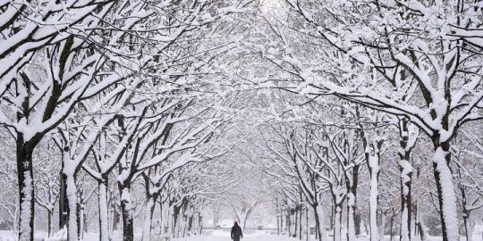 Snowfall on the way for Montreal