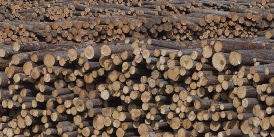 Lumber workers in B.C.'s Southern Interior may go on strike next week