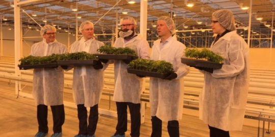 Aurora Cannabis to buy MedReleaf in all stock deal worth $3.2 billion