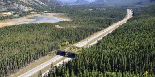 More fines, tickets await land abusers on Alberta public lands this summer