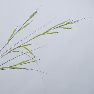 Silk-ka blomst gress 134 cm