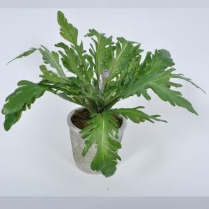 Silk-Ka plante bregne 38cm