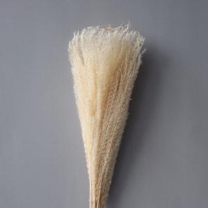 Cooee Strå Feather Pampas Hvit