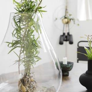 house doctor vase terrarium