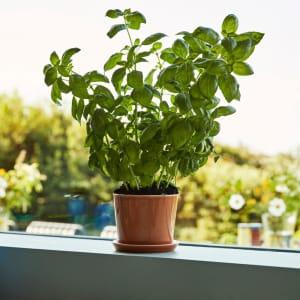 Hay Blomsterpotte Botanical M Karamell