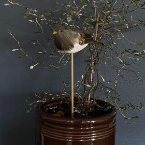 UND Småfugl på pinne Natur
