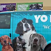 Van with a wrap of puppies