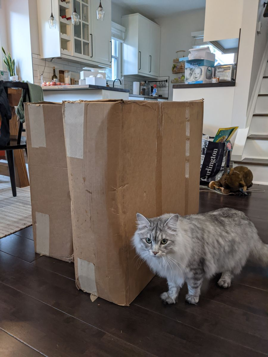 Table legs in their boxes, cat for scale.