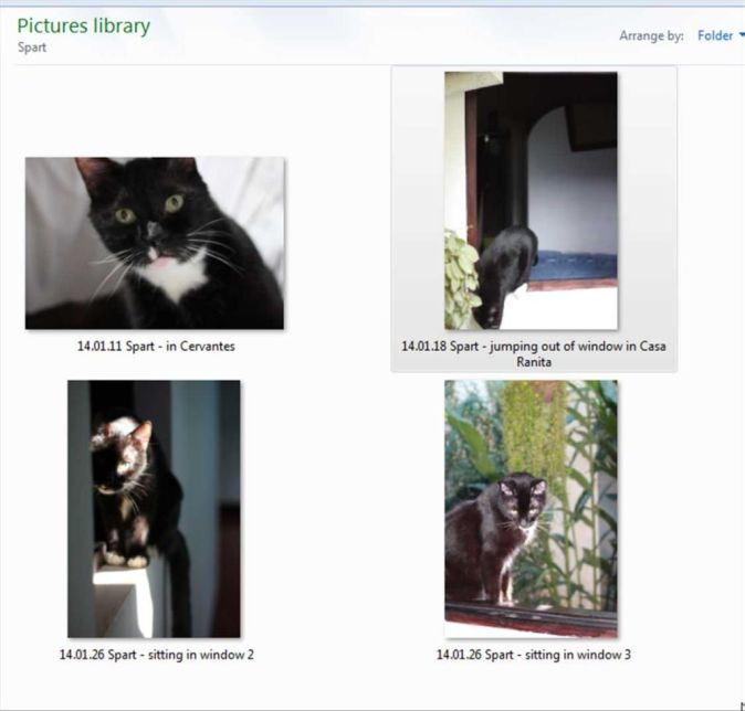 How to Create Your Pet Memorial Slideshow