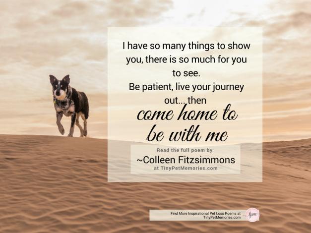 Poems For Dog 3