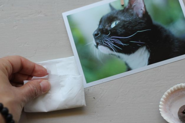 How to clip your pet's fur for a pet hair keepsake