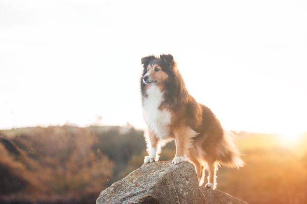 Take one great pet portrait: Tips for perfect photos