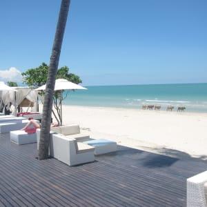 Ayutthaya & Mae Klong ab Bangkok: 1TH-Aava-Resort-Khanom-Beach-Cows-01-20