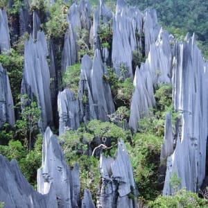 Höhepunkte Borneos ab Kuching: Borneo Mulu Nationalpark