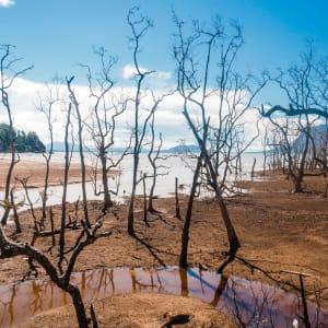 Höhepunkte Borneos ab Kuching: Borneo Sarawak Bako Nationalpark