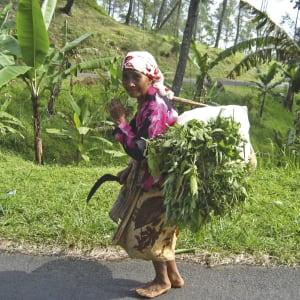 Entdeckertour Mittel-Java ab Yogyakarta und Umgebung: Indonesien Java Farmerin