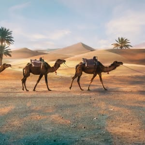 Südmarokko - Atlas & Wüste ab Marrakesch: Marokko Merzouga Berber mit Kamele