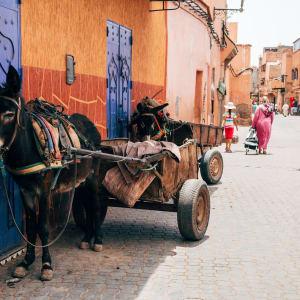 Kurztrip Süden ab Marrakesch: Marrakesch Eselkarren