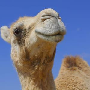 Natur & Kultur Oman ab Muscat: Oman Kamel