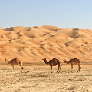 Abenteuer Dhofar - Küste & Wüste ab Salalah: Oman Wüste Kamele