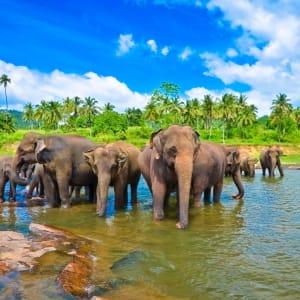 Familienabenteuer Sri Lanka ab Colombo: Sri Lanka Elefanten