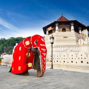 Familienabenteuer Sri Lanka ab Colombo: Sri Lanka Kandy Zahntempel