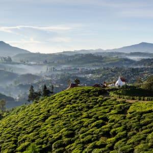 Familienabenteuer Sri Lanka ab Colombo: Sri Lanka Nuwara Eliya Teefelder