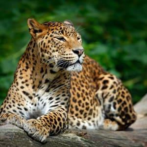 Naturpfade Sri Lankas ab Colombo: Sri Lanka Yala Nationalpark