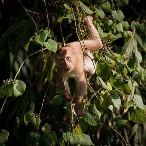 Dschungel-Safari Elephant Hills Camp ab Phuket: Thailand Khao Sok Nationalpark