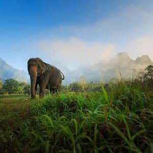 Dschungel-Safari Elephant Hills Camp ab Phuket: Thailand Khao Sok Nationalpark Elephant Hills Camp