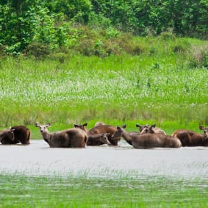 Isan und Süd-Laos ab Bangkok: Thailand Khao Yai Nationalpark Rehe