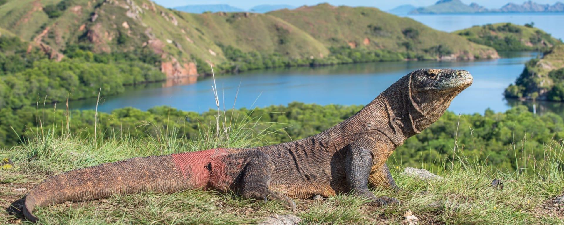 Abenteuer Komodo ab Labuan Bajo: Indonesien Flores Komodo Rinca Waran