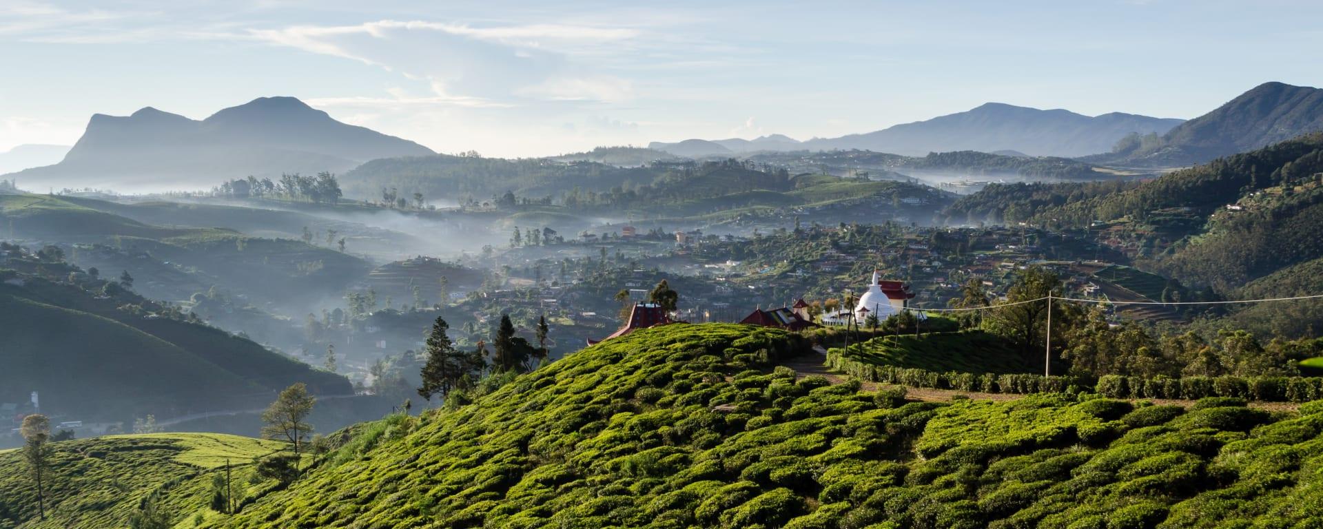 Naturpfade Sri Lankas ab Colombo: Sri Lanka Nuwara Eliya Teefelder