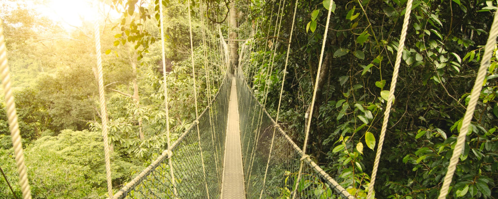 Malaysia entdecken mit Tischler Reisen: Malaysia Taman Negara Canopy Walk