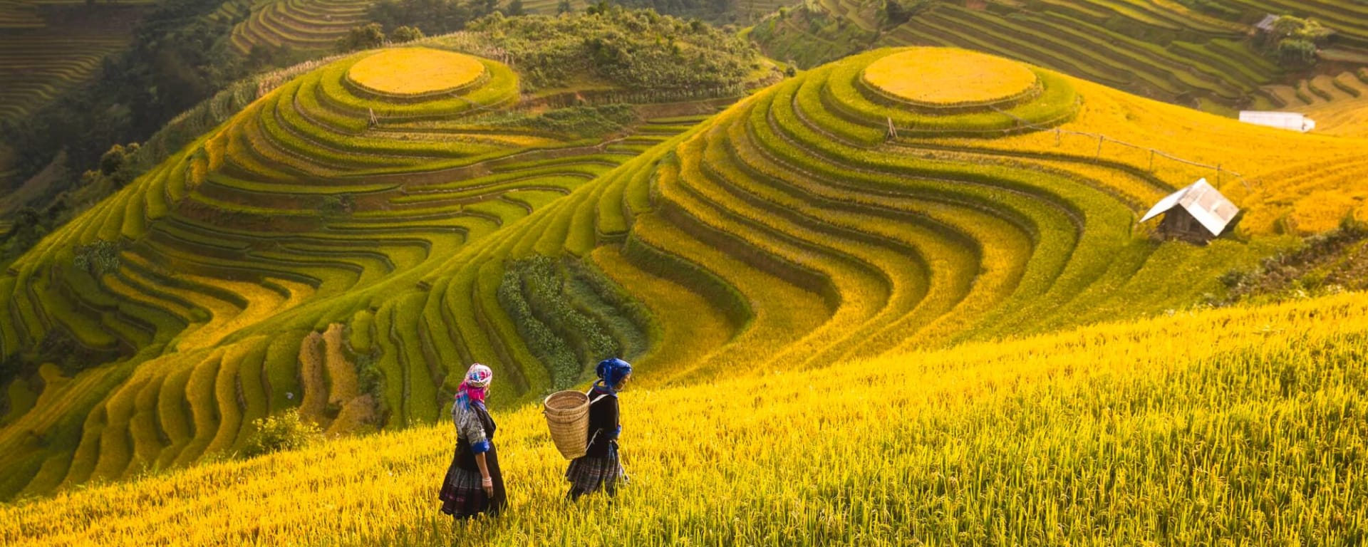 Vietnam entdecken mit Tischler Reisen: Vietnam Reisterrassen Sapa