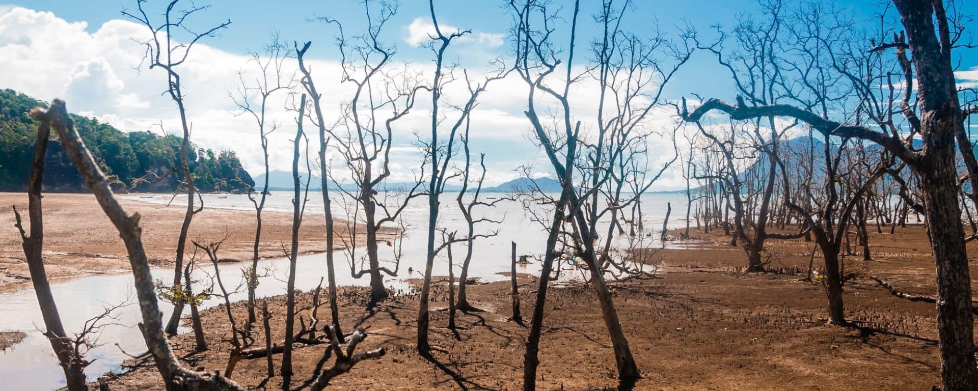 Bako Nationalpark, EN, Ganztägig in Kuching: Borneo Sarawak Bako Nationalpark