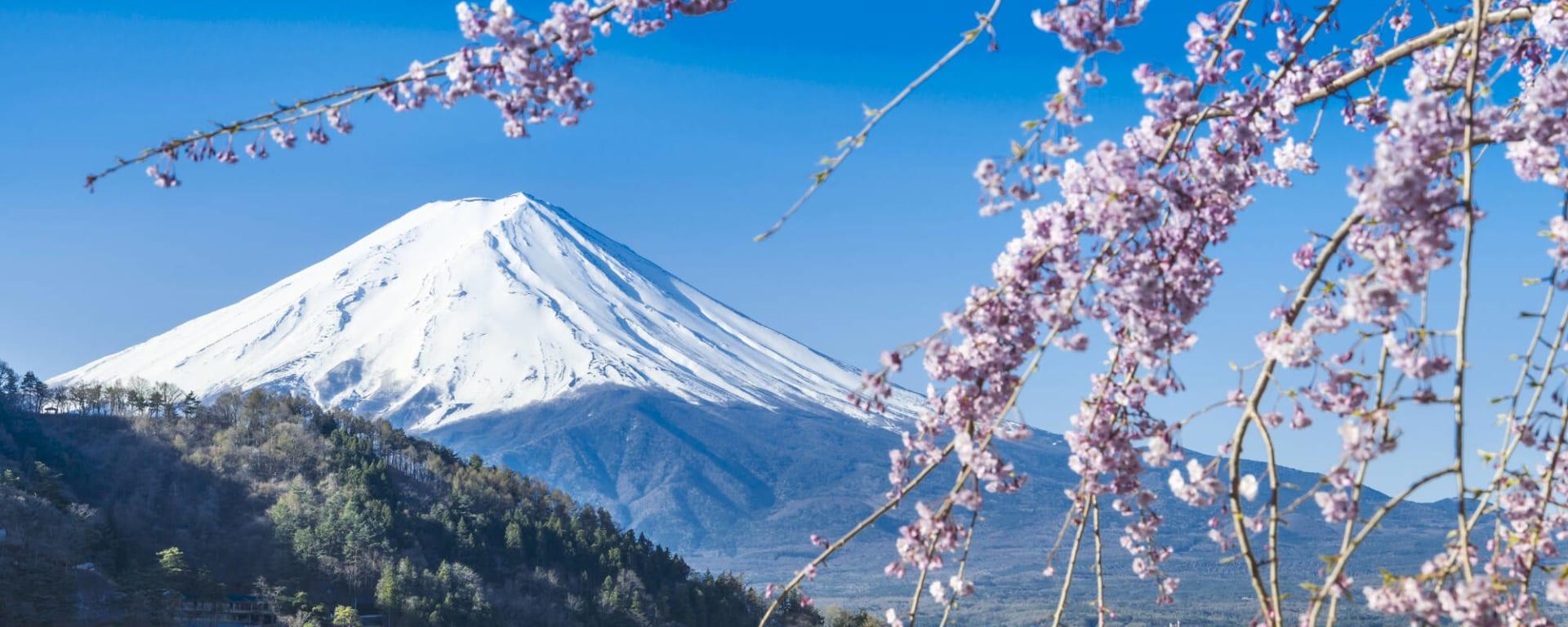 Japan entdecken mit Tischler Reisen: Japan Hakone Mount Fuji Kirschblüte