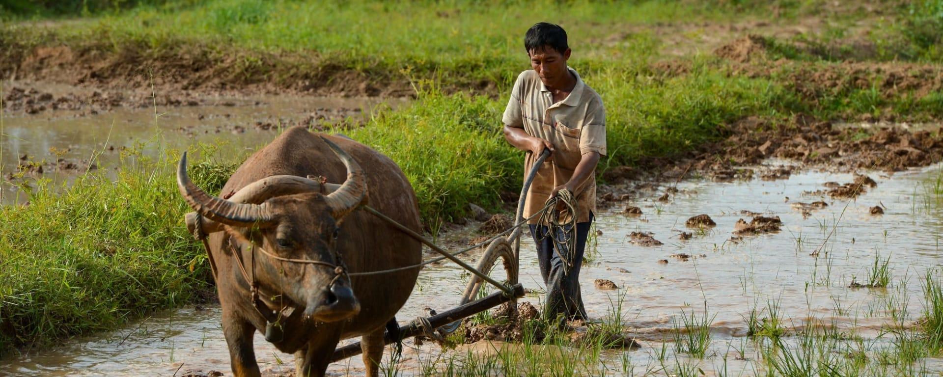 Soft Adventure Nordthailand ab Chiang Mai: Thailand Nordthailand Farmer