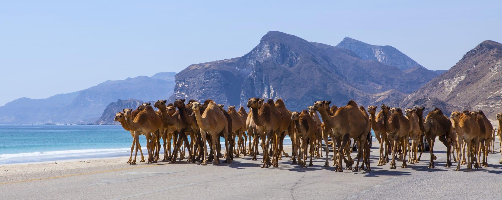Abenteuer Dhofar - Küste & Wüste ab Salalah: Oman Salalah Kamele am Strand