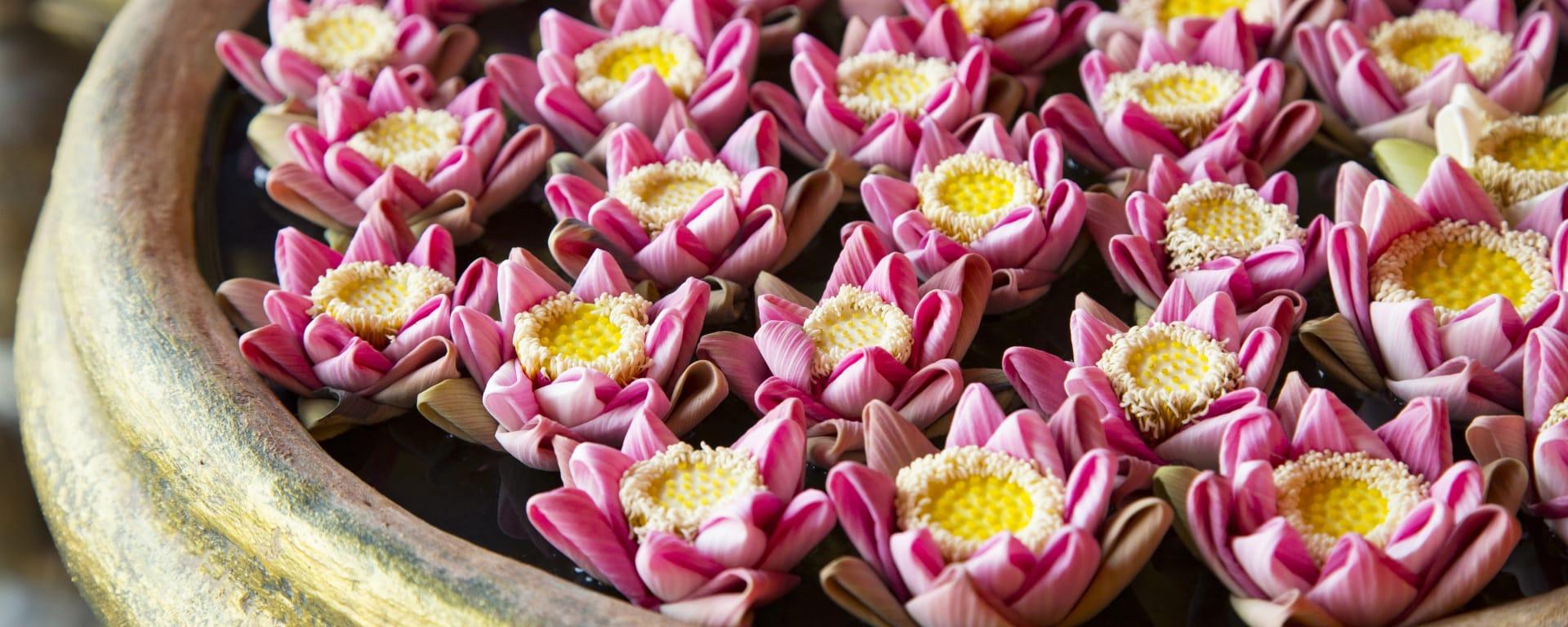 Kambodscha entdecken mit Tischler Reisen: Lotusblumen in Schale
